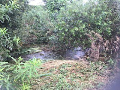 平成28年度第3回河川清掃