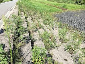 平成29年度第2回河川清掃