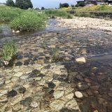 令和3年 第1回河川清掃&水質調査の報告